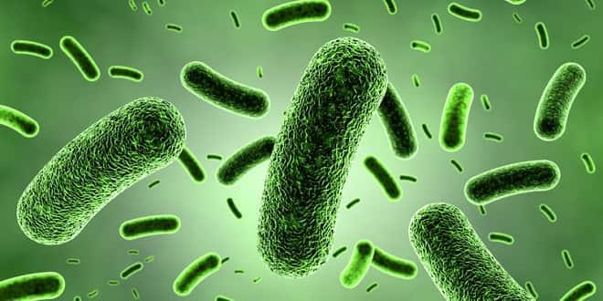 bacterias y germenes flotando en el agua