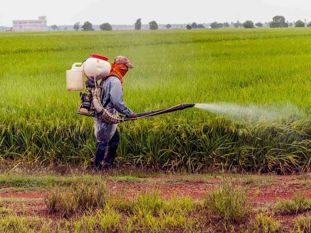 metales pesados en el día a día por alimentos y pesticidas